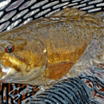 Top Smallmouth Bass Baits of 2016
